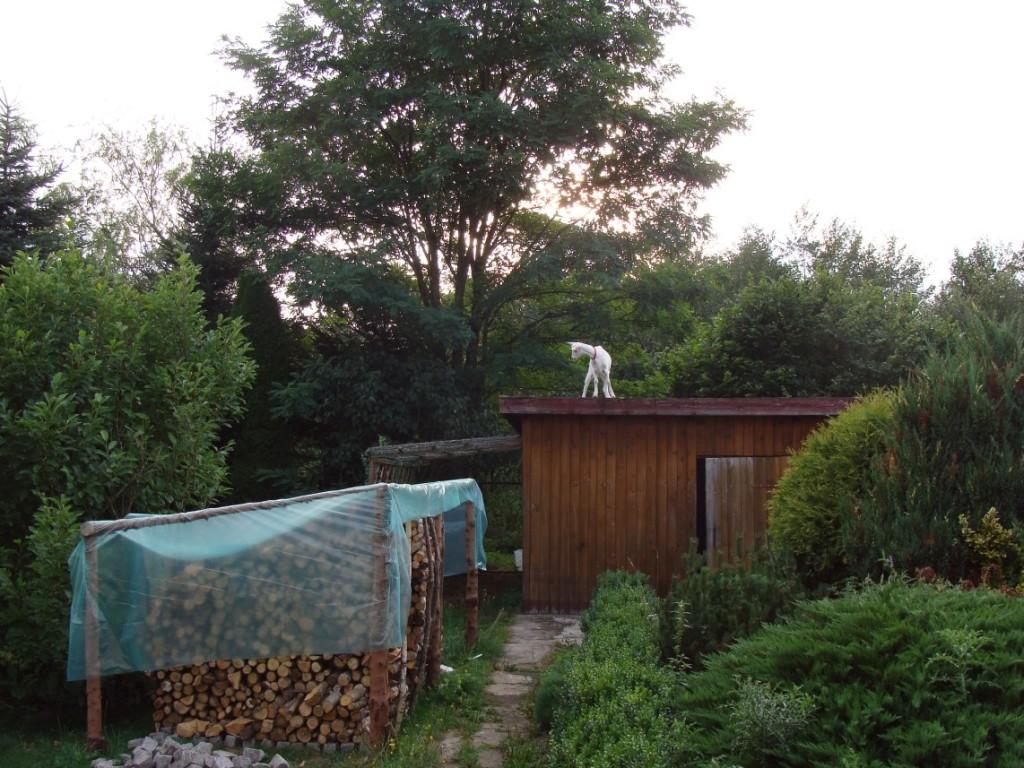 koza na dachu3